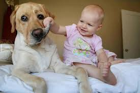 Image result for This dog must have the patience of a saint. How else can you explain why he's able to so calmly let a toddler use his tongue as a play-toy?